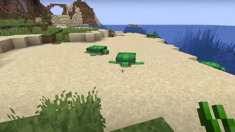 Turtles Ocean Biome