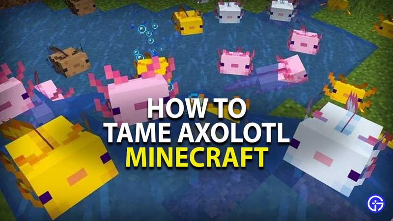 how to tame axolotl in minecraft
