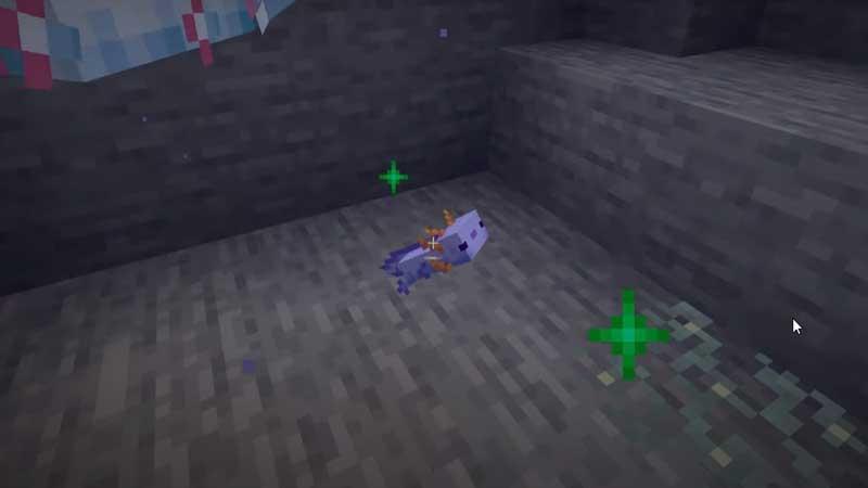 minecraft baby axolotl