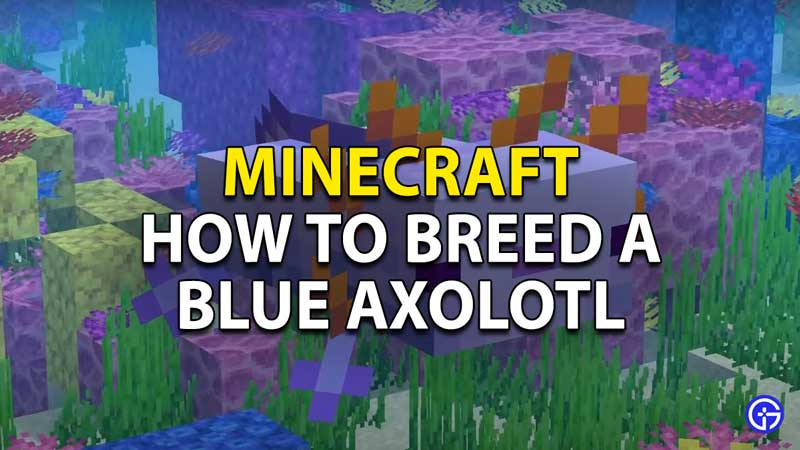 minecraft how to breed a blue axolotl
