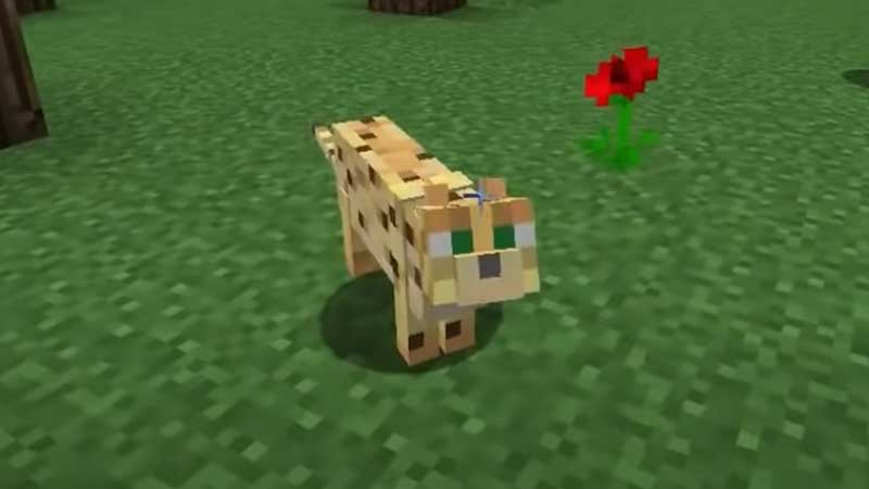 ocelot minecraft tameable animal