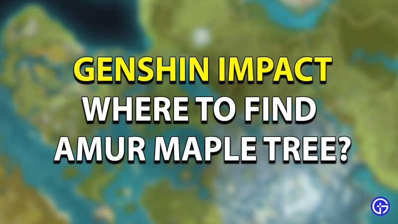 Genshin Impact Amur Maple Location