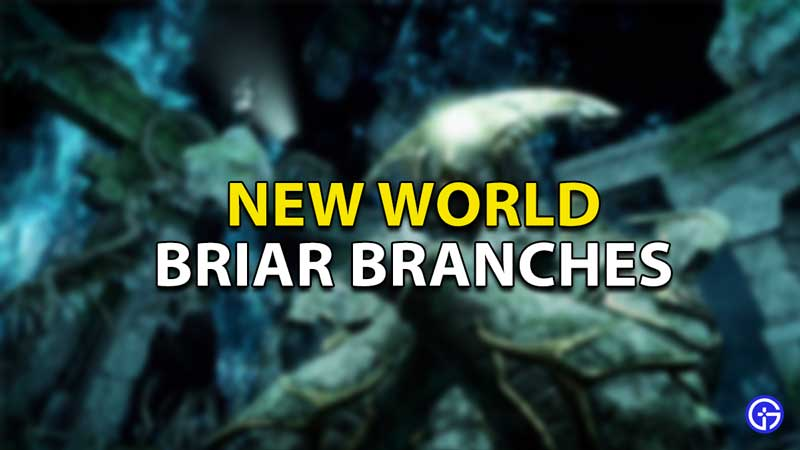 everything you need to know about briar branches
