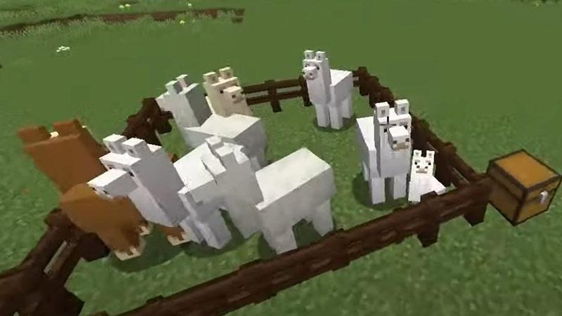 breeding llamas in minecraft