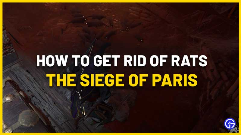 how to get rid of rat swarm in ac valhalla