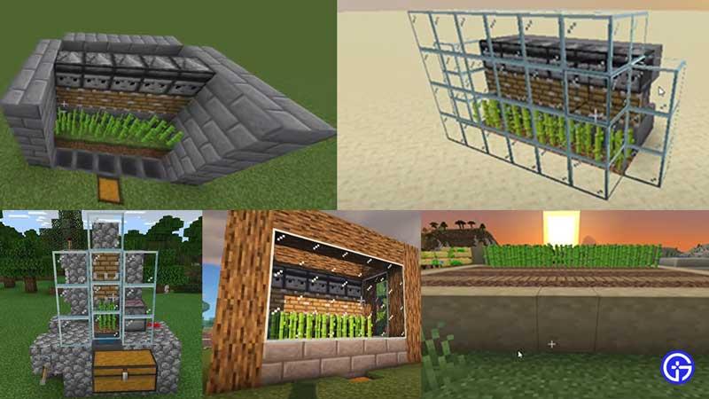sugarcane farm minecraft