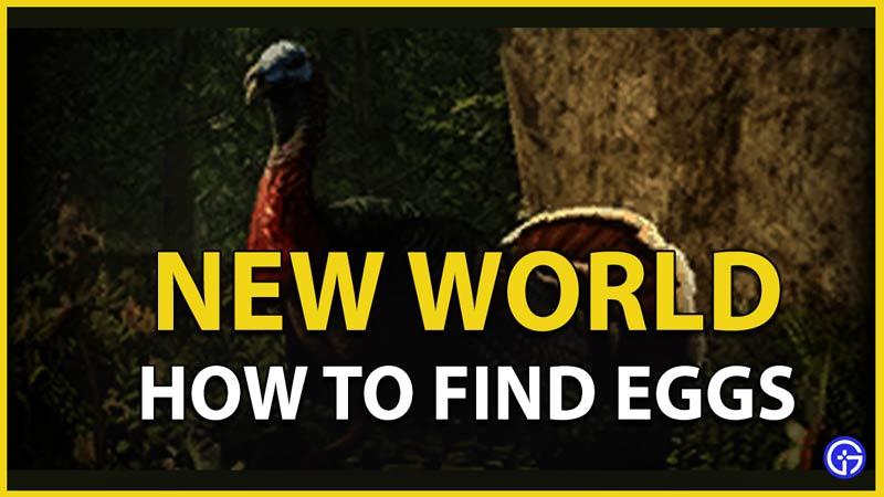 eggs turkey new world