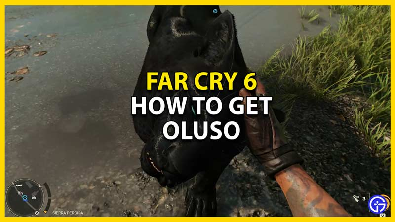 how to get oluso in far cry 6