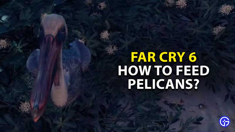 how-to-feed-pelicans-and-where-to-find-far-cry-6