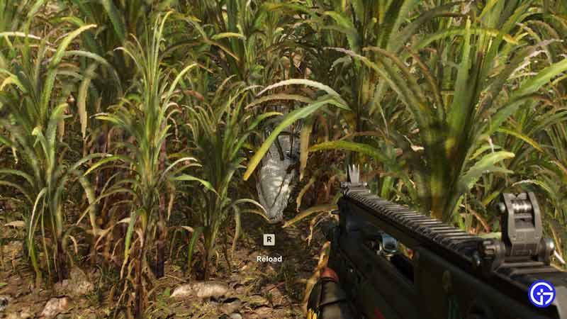 hunt crocodile
